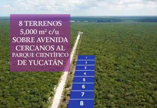 Terreno 5 mil mts sobre avenida a 8 minutos de Chuburna Puerto